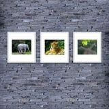 marco de la foto en la textura o el fondo, color gris de la pared de ladrillo de Fotos de archivo libres de regalías
