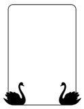 Marco de la frontera del cisne Imagen de archivo libre de regalías