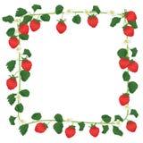 Marco de la fruta de la fresa Imagen de archivo libre de regalías