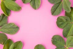 Marco de la guirnalda hecho de las hojas aisladas en fondo en colores pastel rosado visión superior puesta imágenes de archivo libres de regalías