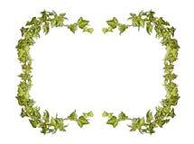 Marco de la hiedra Imagen de archivo libre de regalías