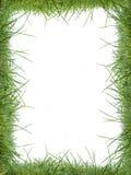 Marco de la hierba Imágenes de archivo libres de regalías