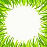 Marco de la hierba Imagen de archivo libre de regalías