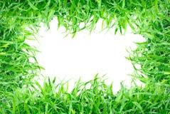 Marco de la hierba aislado Imagen de archivo