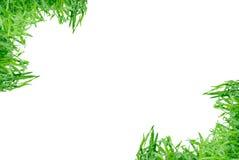 Marco de la hierba aislado Foto de archivo libre de regalías
