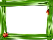 Marco de la hierba con las mariquitas. Imágenes de archivo libres de regalías