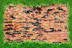 Marco de la hierba verde en la pared de ladrillo del grunge Foto de archivo