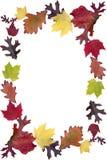 Marco de la hoja del otoño Imagen de archivo libre de regalías