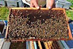 Marco de la miel Imagen de archivo libre de regalías