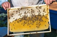 Marco de la miel Fotos de archivo