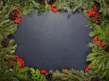 Marco de la Navidad con el árbol de abeto, los conos y las azufaifas imperecederos del acebo Imágenes de archivo libres de regalías
