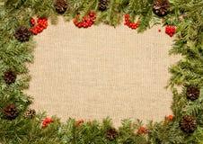 Marco de la Navidad con el árbol de abeto, los conos y las azufaifas imperecederos del acebo Fotografía de archivo