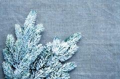 Marco de la plantilla de la Navidad con la rama del pino de la nieve Fotos de archivo libres de regalías