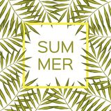 Marco de la rama de la palma Fondo del vector del verano con el marco de la palmera Fotografía de archivo