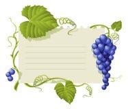 Marco de la vendimia con las uvas del racimo y la hoja verde stock de ilustración