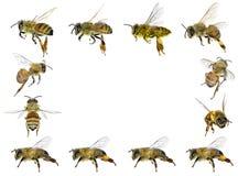 Marco de las abejas Fotografía de archivo