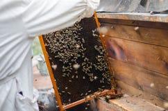 Marco de las calles con las abejas de la miel Foto de archivo