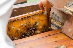 Marco de las calles con las abejas de la miel Fotografía de archivo