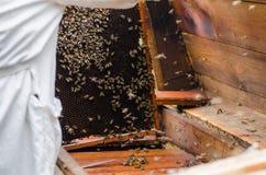 Marco de las calles con las abejas de la miel Imagenes de archivo