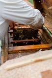 Marco de las calles con las abejas de la miel Fotos de archivo