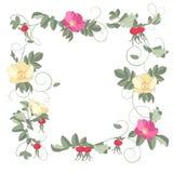 Marco de las flores de las rosas Imagen de archivo