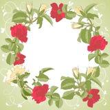 Marco de las flores de las rosas Foto de archivo