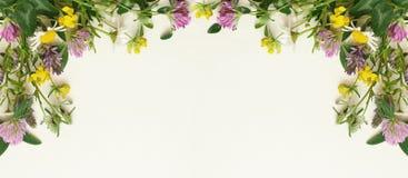 Marco de las flores salvajes Foto de archivo