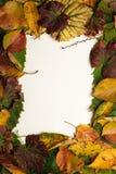 Marco de las hojas Imagen de archivo