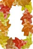 Marco de las hojas Imagenes de archivo