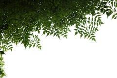 Marco de las hojas Imágenes de archivo libres de regalías