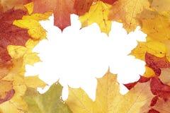 Marco de las hojas de arce imagen de archivo libre de regalías