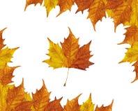 Marco de las hojas de arce Fotos de archivo libres de regalías