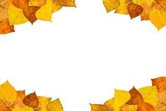 Marco de las hojas de otoño Foto de archivo libre de regalías