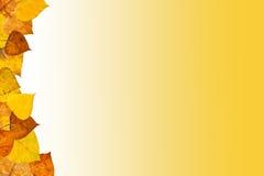 Marco de las hojas de otoño Imagen de archivo libre de regalías