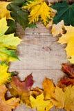Marco de las hojas de otoño Fotografía de archivo libre de regalías