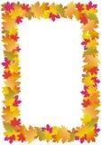 Marco de las hojas de otoño (arce) Fotografía de archivo