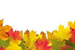 Marco de las hojas de otoño sobre el blanco para su texto Fotografía de archivo
