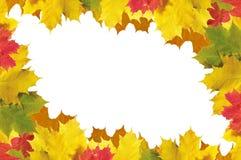 Marco de las hojas de otoño sobre el blanco para su texto Imagenes de archivo