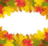 Marco de las hojas de otoño sobre el blanco para su texto Imagen de archivo libre de regalías