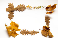 Marco de las hojas de otoño Fotos de archivo libres de regalías