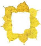 Marco de las hojas de otoño Imágenes de archivo libres de regalías