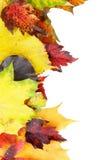 Marco de las hojas del otoño Foto de archivo libre de regalías