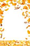 Marco de las hojas que cae Imagen de archivo libre de regalías