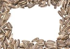 Marco de las semillas de girasol. Imagen de archivo libre de regalías