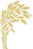 Marco de los oídos del trigo, frontera o elemento de la esquina Imagen de archivo libre de regalías