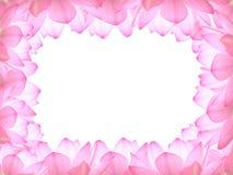 Marco de Lotus Fotografía de archivo libre de regalías