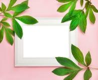 Marco de madera blanco en el fondo rosado adornado con las hojas verdes, espacio en blanco para un texto Visión superior, endecha Imagen de archivo