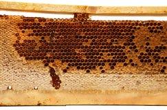 Marco de madera con el peine de la miel en el fondo blanco Imagen de archivo