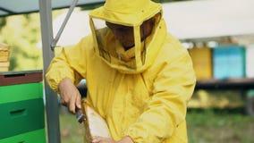 Marco de madera limpio de la miel del hombre del apicultor que trabaja en el colmenar el día de verano Foto de archivo libre de regalías