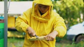 Marco de madera limpio de la miel del hombre del apicultor que trabaja en el colmenar el día de verano Imagen de archivo libre de regalías